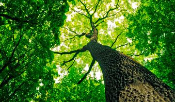 OPUS Marketing bietet individuelle Markenarchitektur für die Grüne Branche an